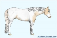 Horse Color:White Spotted Silver Classic Champagne Pearl Tobiano Frame
