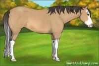 Horse Color:Buckskin Roan Splash