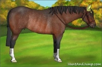 Horse Color:Bay Rabicano