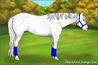 Horse Color:Silver Blue Roan Splash Frame Appaloosa Rabicano