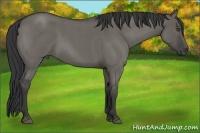 Horse Color:Grullo Roan