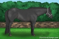 Horse Color:Smokey Black