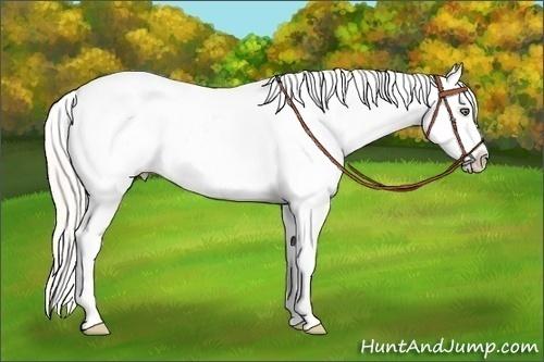 Horse Color:Silver Amber Champagne Sabino Splash Appaloosa Rabicano  Brindle