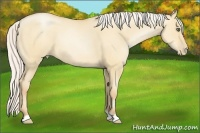 Horse Color:Silver Amber Champagne Pearl Dun