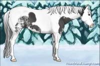 Horse Color:White Spotted Smokey Black Splash Tobiano