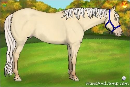 Horse Color:Silver Amber Champagne Dun Rabicano