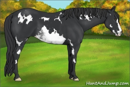 Horse Color:White Black Frame