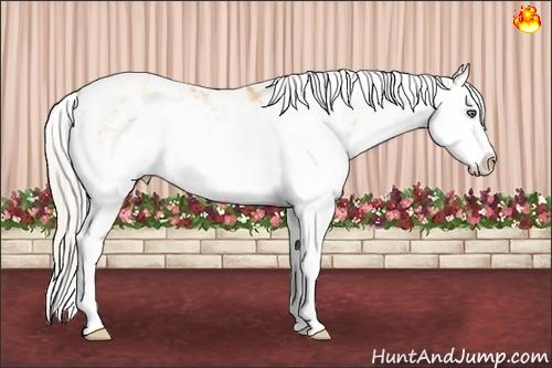 Horse Color:Silver Amber Champagne Dun Sabino Splash