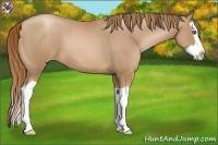 Horse Color:Chestnut Pearl Splash