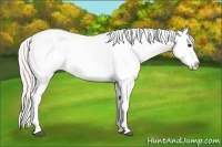 Horse Color:White Spotted Silver Bay Dun Splash Tobiano Appaloosa Rabicano