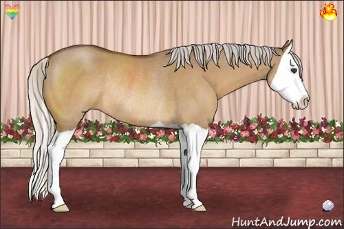 Horse Color:Silver Bay Dun Splash Rabicano