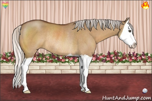 Horse Color:Silver Bay Dun Splash Rabicano