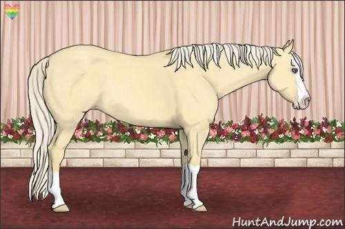 Horse Color:Gold Cream Champagne Dun Splash Rabicano