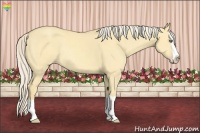 Horse Color:Gold Cream Champagne Dun Splash Rabicano