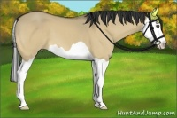 Horse Color:Buckskin Dun Splash