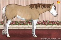 Horse Color:Red Dun Splash Rabicano