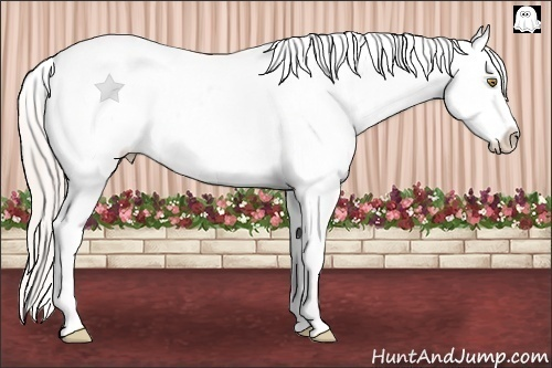 Horse Color:White Spotted Silver Classic Champagne Dun Splash Tobiano Appaloosa