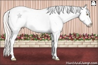 Horse Color:White Spotted Silver Classic Champagne Dun Splash Tobiano Appaloosa