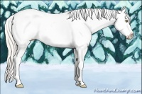 Horse Color:Silver Amber Champagne Roan Splash Tobiano Appaloosa