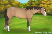 Horse Color:Amber Champagne Splash