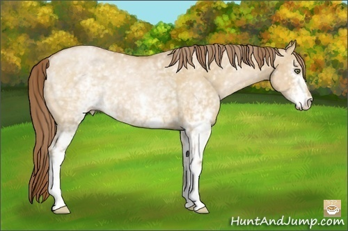 Horse Color:White Spotted Bay Pearl Dun