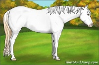 Horse Color:Classic Cream Champagne Roan Frame Appaloosa