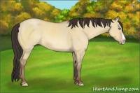 Horse Color:Amber Champagne Dun Splash Rabicano