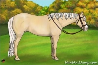Horse Color:Silver Amber Cream Champagne Splash Rabicano