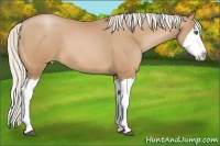 Horse Color:Silver Bay Pearl Splash