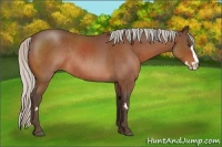 Horse Color:Silver Bay Roan Splash Frame Rabicano