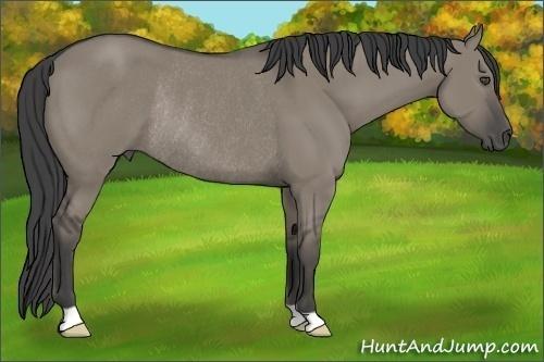 Horse Color:Smokey Grullo Rabicano