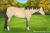 Horse Color:Amber Cream Champagne