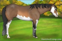 Horse Color:Buckskin Sabino Splash Frame