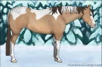 Horse Color:Amber Champagne Splash Tobiano Rabicano