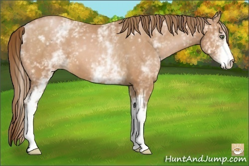 Horse Color:White Spotted Bay Pearl