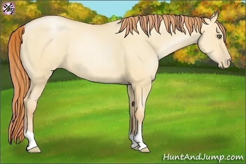 Horse Color:Amber Champagne Pearl Dun