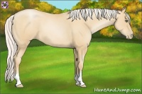 Horse Color:Silver Amber Champagne Pearl