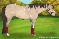 Horse Color:White Spotted Amber Cream Champagne Roan