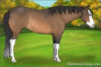 Horse Color:Buckskin Splash Rabicano