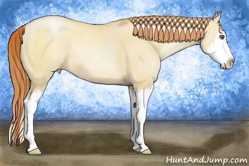 Horse Color:Amber Champagne Pearl Dun Sabino Splash Rabicano
