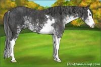 Horse Color:Black Sabino Splash  Brindle