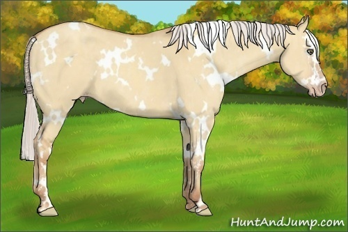 Horse Color:White Spotted Silver Classic Champagne Dun Sabino Splash  Brindle