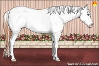 Horse Color:Classic Champagne Roan Dun Sabino Splash Appaloosa  Brindle