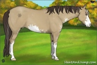 Horse Color:Classic Champagne Dun Sabino