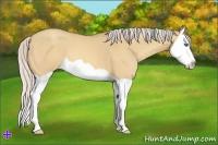 Horse Color:Silver Amber Champagne Dun Splash
