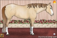 Horse Color:Bay Pearl Dun Splash  Brindle