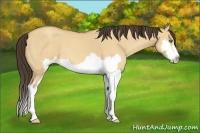 Horse Color:Amber Champagne Dun Sabino Splash Frame