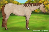 Horse Color:Red Dun Roan