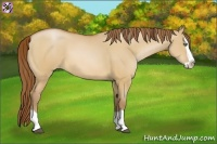 Horse Color:Bay Pearl Dun Splash