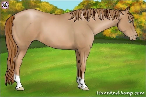 Horse Color:Chestnut Pearl